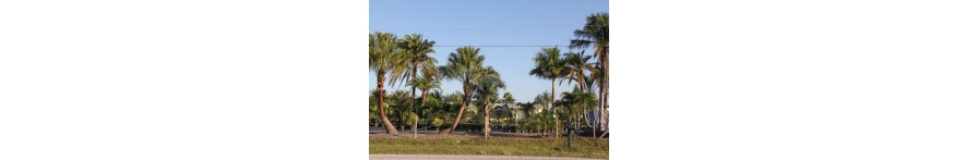 Other Palms